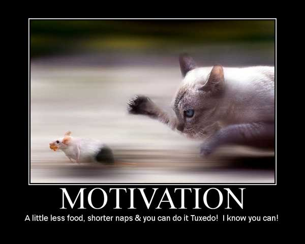 motivational poster for our cat Tuxedo
