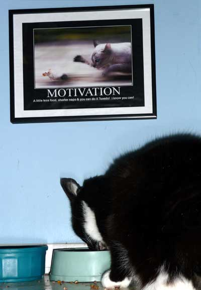 tuxedo motivational poster